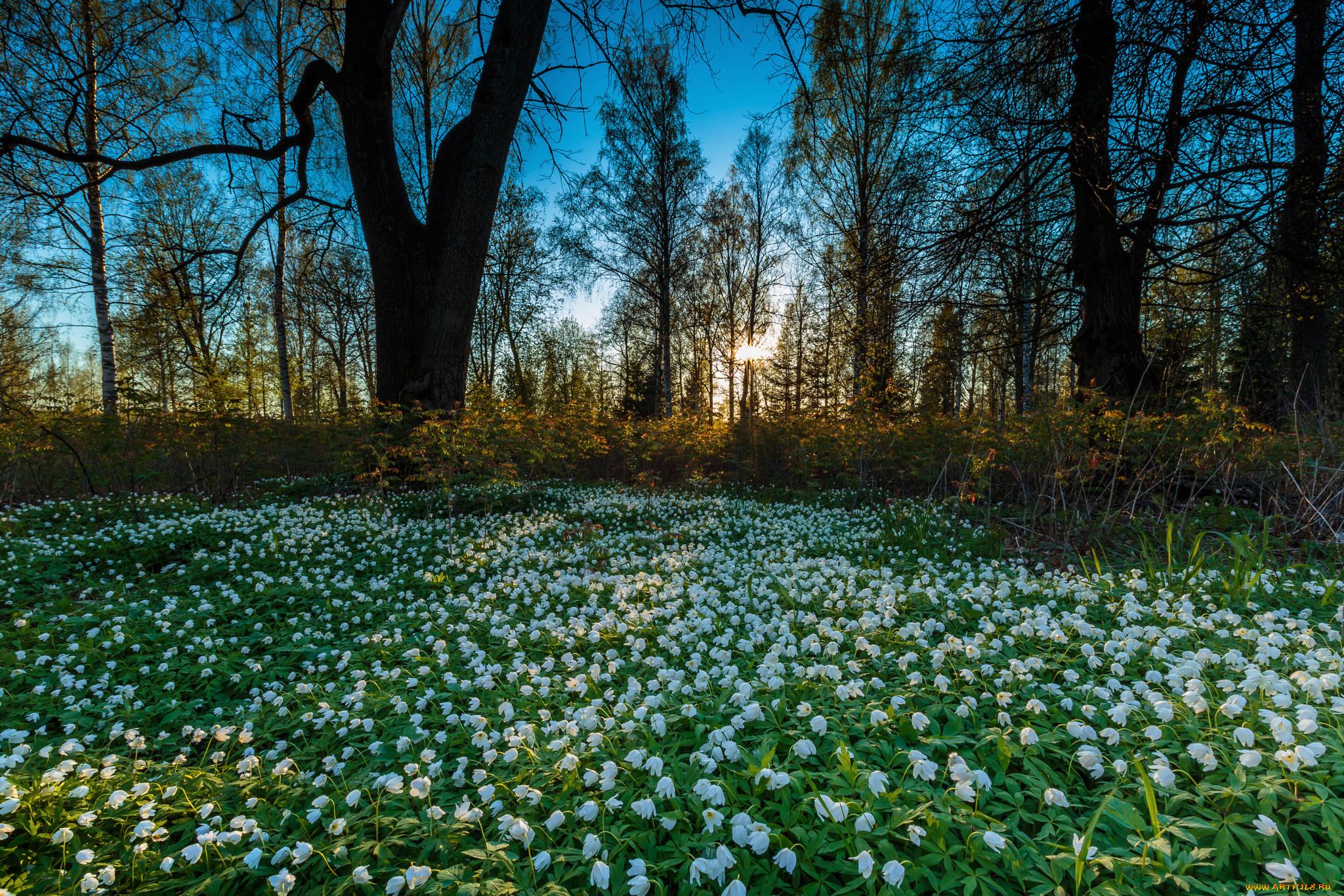 Картинки с весной природой